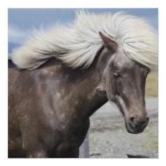 Cute Adorable Pony Animal Horse Pet Grace Destiny