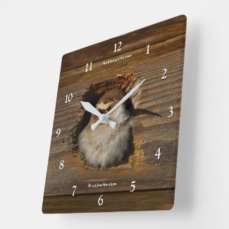 Cute Airbnb Moment Bewick's Wren in Nestbox Square Wall Clock