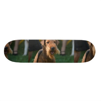 Cute Airedale Terrier Skateboards