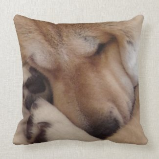 cute akita dog asleep cuddling paws original photo cushion