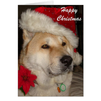 Cute akita dog red santa hat pointsettia christmas card