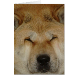 cute akita funny big loving face photograph greeting card