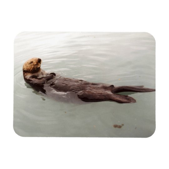 Cute Alaska Sea Otter Photo Designed Refrigerator Magnet
