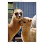 Cute Alpacas Note Card