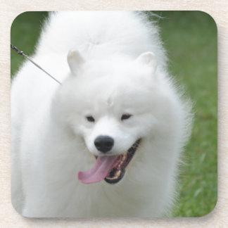 Cute American Eskimo Dog Drink Coaster
