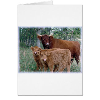 Cute and adorable fluffy fatty Highland calves Greeting Card