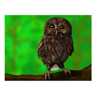 Cute and Curious Owl Sitting in a Tree Postcard