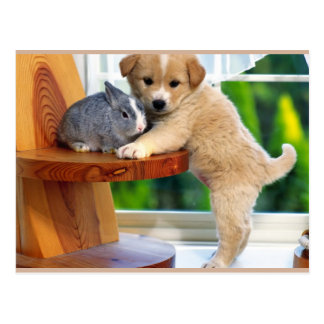 Cute Animals Postcard