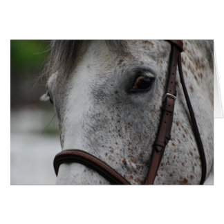 Cute Appaloosa Horse Greeting Card