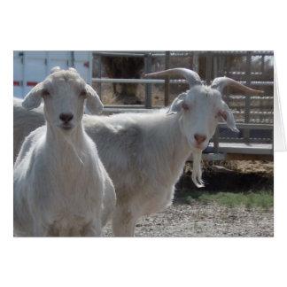 Cute Aries Happy Birthday Goats Card