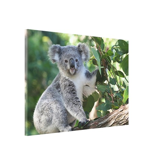 Cute Australian koala in a gumtree Canvas Print