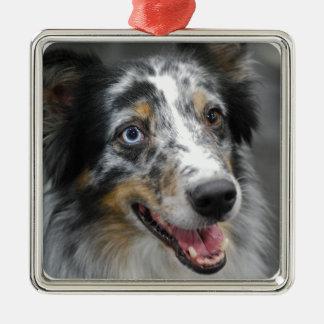 Cute Australian Shepherd  Ornament