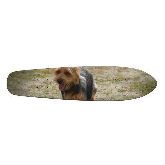 Cute Australian Terrier Skate Board