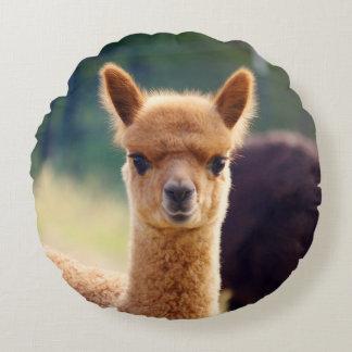 Cute Baby Alpaca Round Pillow