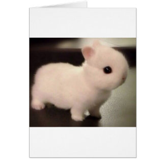 Cute baby bunny card
