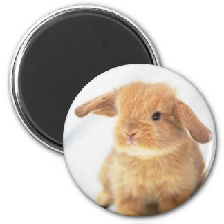Cute Baby Bunny Happy Easter Design Magnet