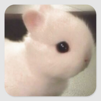 Cute baby bunny square sticker