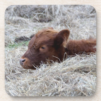 Cute Baby Calf Cow, Hard Plastic Coasters
