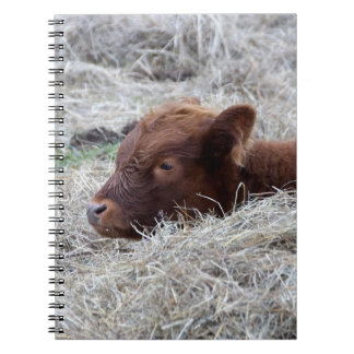 Cute Baby Calf, Farmyard Animal Spiral Notebook