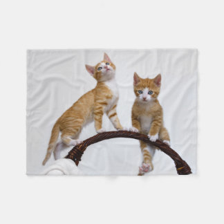 Cute Baby Cats Kittens Funny Gym Photo - comfy Fleece Blanket