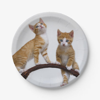 Cute Baby Cats Kittens Funny Gym Photo Party Paper Plate