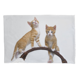 Cute Baby Cats Kittens Funny Gym Photo Pillowcover Pillowcase