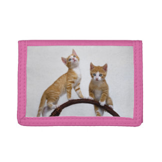 Cute Baby Cats Kittens Funny Gym Photo - Purse Tri-fold Wallet