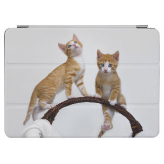 Cute Baby Cats Kittens Funny Playing Gym Photo - iPad Air Cover