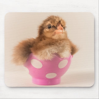 Cute Baby Chick in Easter Egg Mouse Pad