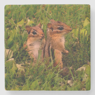 Cute Baby Chipmunks Animal Art Stone Coaster