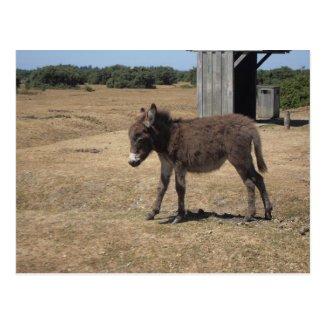 Cute baby donkey foal