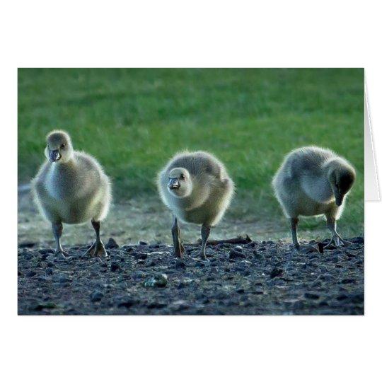 Cute Baby Geese Card