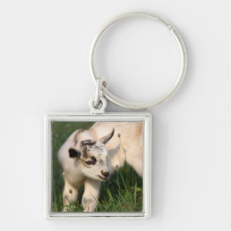 Cute Baby Goat Silver-Colored Square Key Ring