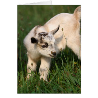 Cute Baby Goat Note Card