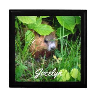 Cute Baby Groundhog La Marmotte Canada Customize Gift Box