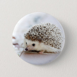 Cute Baby Hedgehog 6 Cm Round Badge