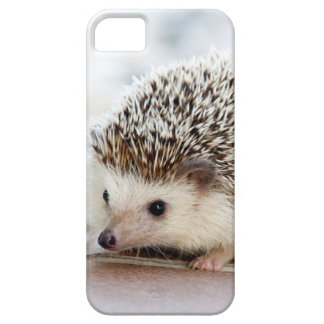 Cute Baby Hedgehog Animal iPhone 5 Cover