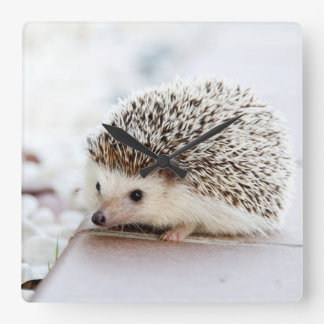 Cute Baby Hedgehog Animal Square Wall Clock