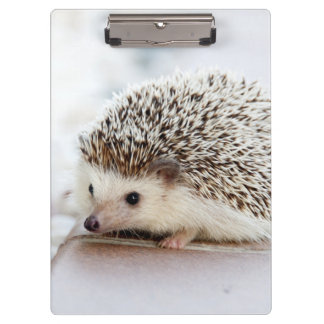 Cute Baby Hedgehog Clipboard