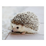 Cute Baby Hedgehog Customisable Poster