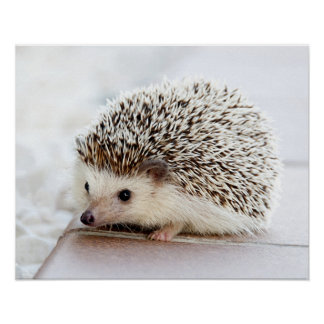Cute Baby Hedgehog Customizable Poster