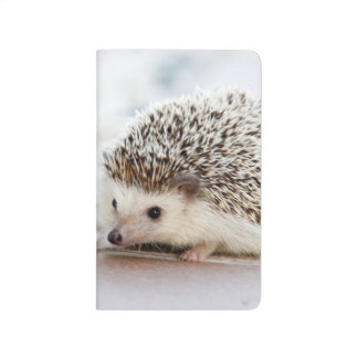 Cute Baby Hedgehog Journals