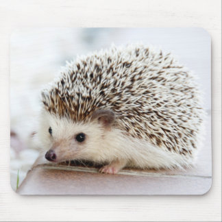 Cute Baby Hedgehog Mouse Mat