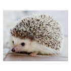 Cute Baby Hedgehog Poster