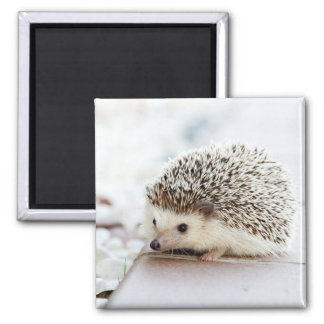 Cute Baby Hedgehog Square Magnet