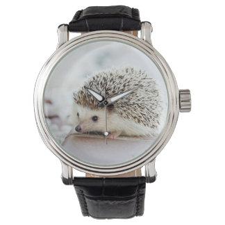 Cute Baby Hedgehog Watch