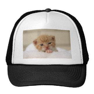 Cute baby kitten in white towel. trucker hats
