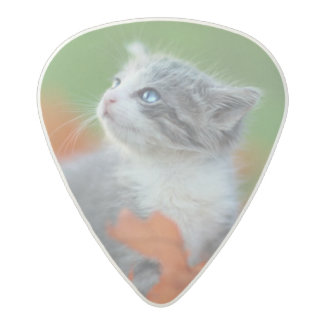 Cute Baby Kittens Playing Outdoors in the Grass Acetal Guitar Pick