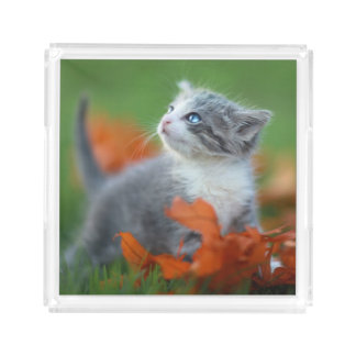 Cute Baby Kittens Playing Outdoors in the Grass Acrylic Tray