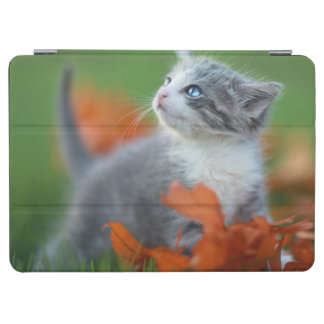 Cute Baby Kittens Playing Outdoors in the Grass iPad Air Cover